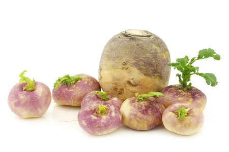 brassica: freshly harvested spring turnips (Brassica rapa) and a common turnip on a white background