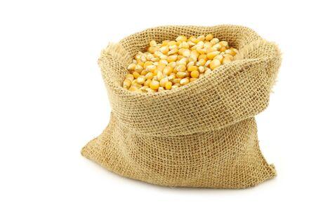 yellow corn: yellow corn grain in a burlap bag on a white background