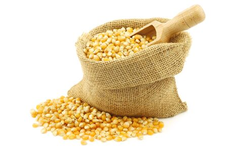yellow corn: yellow corn grain in a burlap bag with a wooden scoop on a white background