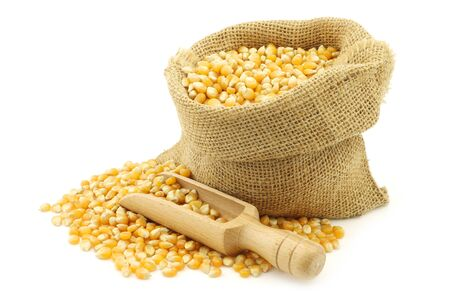 burlap bag: yellow corn grain in a burlap bag with a wooden scoop on a white background