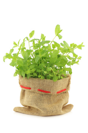 fresh mint in a burlap bag on a white background Stock Photo