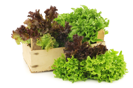 freshly harvested red and green curly lettuce on a white background Stock Photo