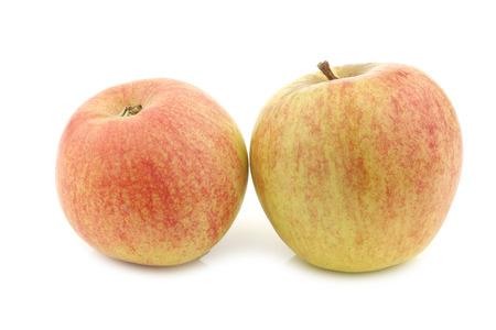 fresh Dutch cooking apples on a white background 版權商用圖片