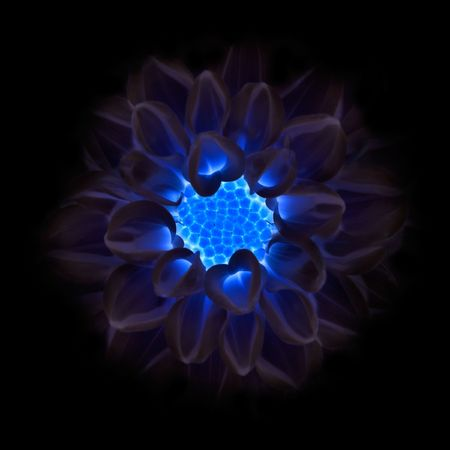 Cold Dark Blue Dahlia Flower Fading into Black Background photo