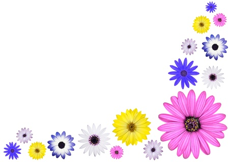 Various Multi Colored Osteospermum Daisy Flowers Isolated on White Background Stock Photo - 9495812