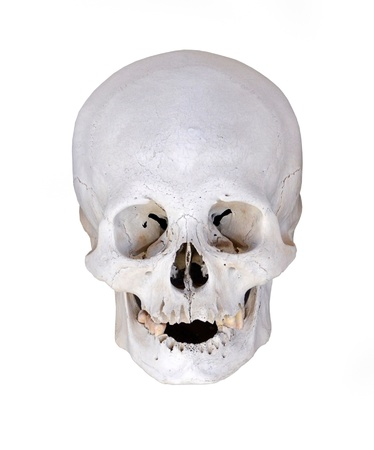anatomical model: Human Skull from excavations isolated on white background Stock Photo