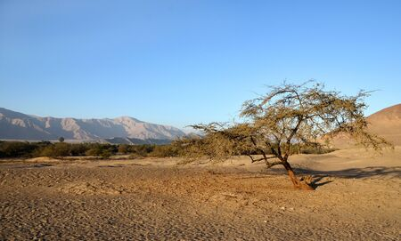 Lonely tree in the desert with mountains and clear blue sky in the background photo