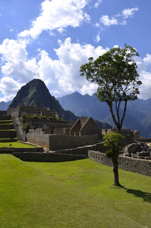 unesco world cultural heritage: Tree on the Machu Picchu site with Huayna Peak in the Background