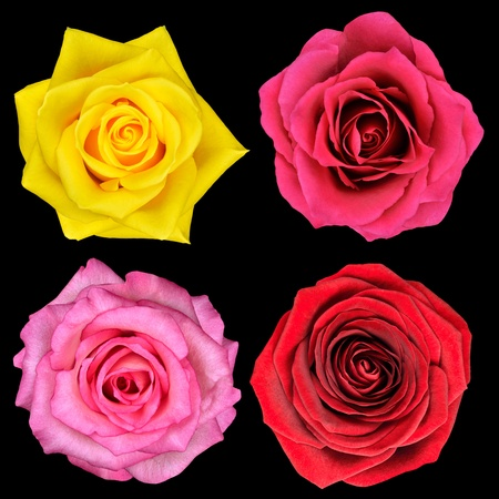 above head: Four Perfect Rose Flower Isolated on Black Background Stock Photo