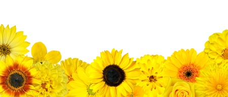 Selection of Yellow Flowers at Bottom Row Isolated on White photo