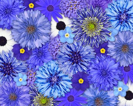 Selection of Various Blue Flowers on top of each other forming blue Background  Daisy, Chrystanthemum, Cornflower, Dahlia, Iberis, Primrose Flowers photo