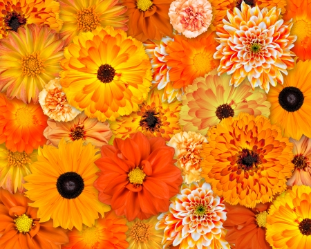 pot marigold: Selection of Various Orange Flowers on top of each other  Background of Dahlia, Daisy, Chrysanthemum, Pot Marigold, Carnation Flowers Stock Photo