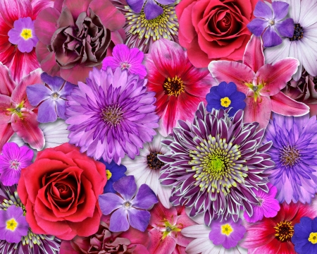 Various Pink, Purple, Red Flowers on top of each other   Background with Selection of Nine Periwinkle, Rose, CornFlower, Lily, Daisy, Chrysanthemum, Dahlia, Carnation, Primrose Flowers