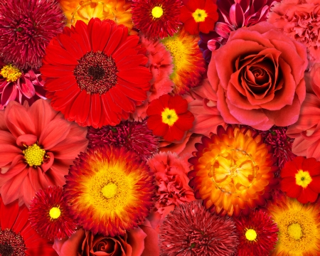 Selection of Various Red Flowers on top of each other forming Red Background  Set of  Dahlia, Gerber, Daisy, Carnation, Rose, Zinnia Flowers photo