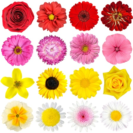 chrysanthemums: Big Selection of Various Flowers Isolated on White Background