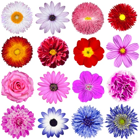 Selection of Various Flowers Isolated on White Background