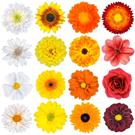 Selection of Various White, Yellow, Orange Flowers Isolated on White Background