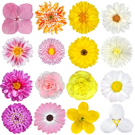 Selection of  Pink, Orange, Yellow and White Flowers Isolated on White Background 스톡 콘텐츠