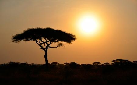 sol naciente: Rising Sun shinning con el �rbol de Acacia solo en �frica Foto de archivo