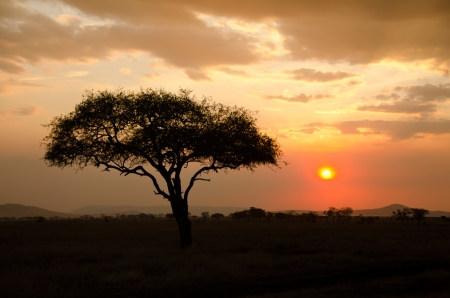 Setting Sun shinning with single Acacia tree in Africa  Beautiful scenery of sunrise   sunset in Serengeti National Park photo