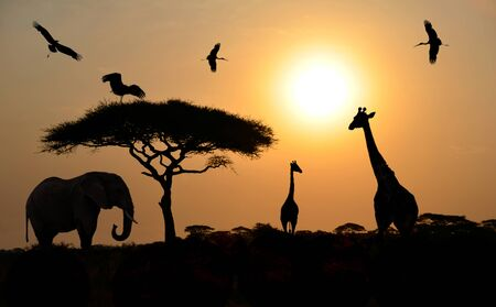 Animals silhouettes standing over sunset on safari in Africa  Elephant, Giraffes, Birds photo