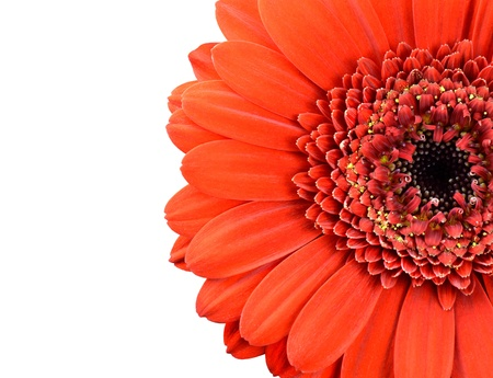 Red Marigold Flower Part Isolated on White Background Stock Photo - 17576986