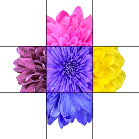 Colorful Chrysanthemum Flower mosaic design which is consisting of 9 squares on 3x3 grid with parts of chrysanthemum flower. photo