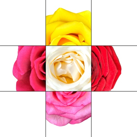 flowerhead: Colorful Rose Flower mosaic design which is consisting of 9 squares on 3x3 grid with parts of Rose flower.