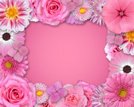 Flower Frame with Pink, Purple, Red Flowers Isolated on Pink Background.   photo