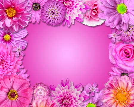 primrose: Flower Frame with Pink, Purple Flowers Isolated on Pink Background.