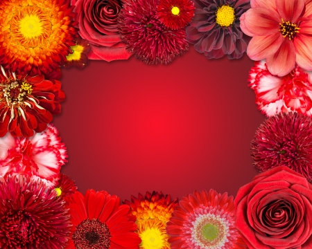 Selection of Various Red Flowers at Bottom Row Isolated on Red Background.  photo