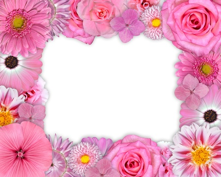 Flower Frame with Pink, Purple, Red Flowers Isolated on White Background. Selection of Nine Periwinkle, Rose, CornFlower, Lily, Daisy, Chrysanthemum, Dahlia, Carnation, Primrose Flowers photo