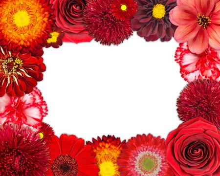 Flower Frame with Selection of Red Flowers with Isolated on White Background. Set of Daisy, Gerber, Marigold, Osteospermum, Chrysanthemum, Strawflower, Cornflower, Dahlia Flowers photo