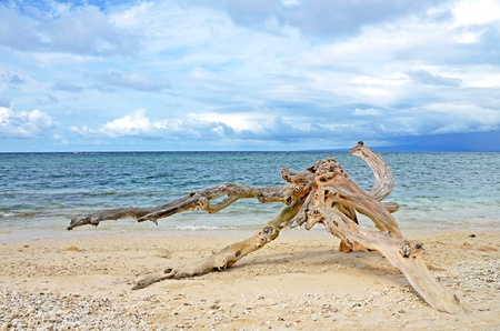drift: Washed out driftwood on sandy beach with ocean and cloudy sky in the background Stock Photo