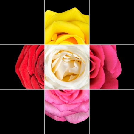 Colorful Rose Flower mosaic design which is consisting of 9 squares on 3x3 grid with parts of Rose flower  photo