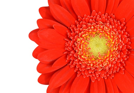 Red Marigold Flower Part Isolated on White Background Stock Photo - 20437634