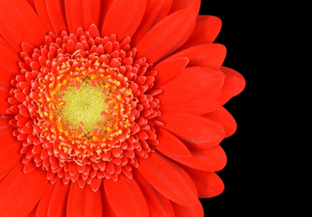 Red Marigold Gerbera  Flower Part Isolated on Black Background Stock Photo - 20669613