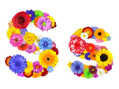 big daisy: Letter S of Flower Alphabet Isolated on White. Letter consist of many colorful and original flowers