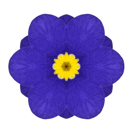 primrose: Blue Primrose Flower Kaleidoscope Isolated on White Background