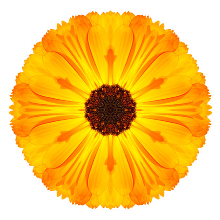 Orange Marigold Mandala Flower Kaleidoscope Isolated on White Background photo