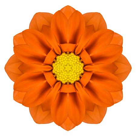 gerber flowers isolated on: Orange Mandala Gerbera Flower Kaleidoscope Isolated on White Background