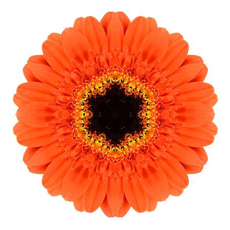 分離されたオレンジ マンダラ ガーベラ花万華鏡 写真素材