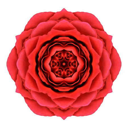 yellow roses: Red Rose Mandala Flower Kaleidoscopic Isolated on White Background