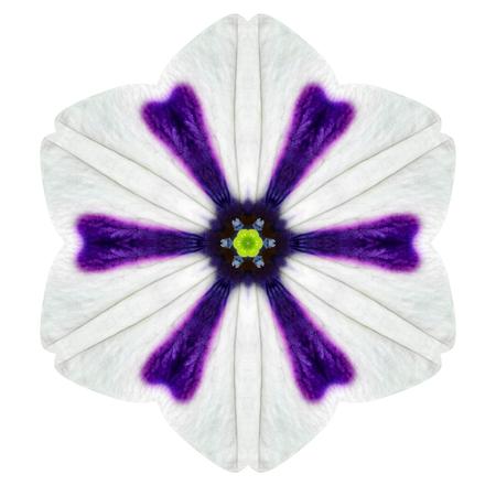 morning glory: White Concentric Morning Glory Flower Isolated on Plain Background. Kaleidoscopic Mandala Design