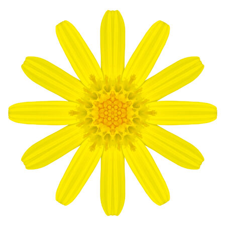 dahlia flower: Yellow Concentric Daisy Flower Isolated on White Background. Kaleidoscopic Mandala Design