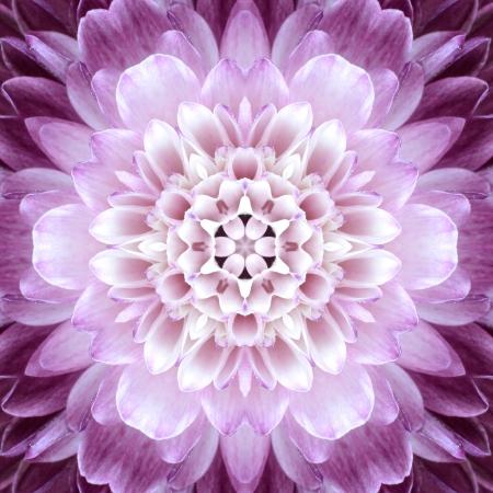 Rosa Concentric Flower Center Macro Close-up. Kaleidoskopische Mandala Design