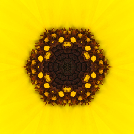 Yellow Concentric Flower Center Macro Close-up. Mandala Kaleidoscopic design photo