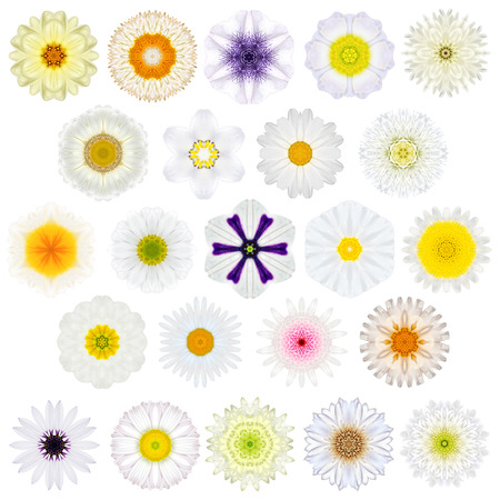 big daisy: Huge Selection of Various Concentric Mandala Flowers Isolated on White