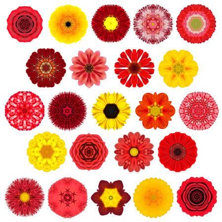 big daisy: Huge Selection of Various Colorful  Kaleidoscopic Mandala Flowers Isolated on White. Big Collection of flowers in Concentric shape pattern. Rose, Daisy, Primrose, Sunflower, Carnation, Marigold, Gerber, Dahlia Zinnia Flowers in Red, Yellow, Orange, Purple