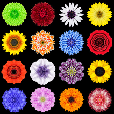 Big Collection of Various Colorful Flowers. Kaleidoscopic Mandala Patterns Isolated on Black Background. Concentric Rose, Daisy, Primrose, Sunflower, Carnation, Marigold, Gerber, Dahlia Zinnia Flowers in mixed colors. photo
